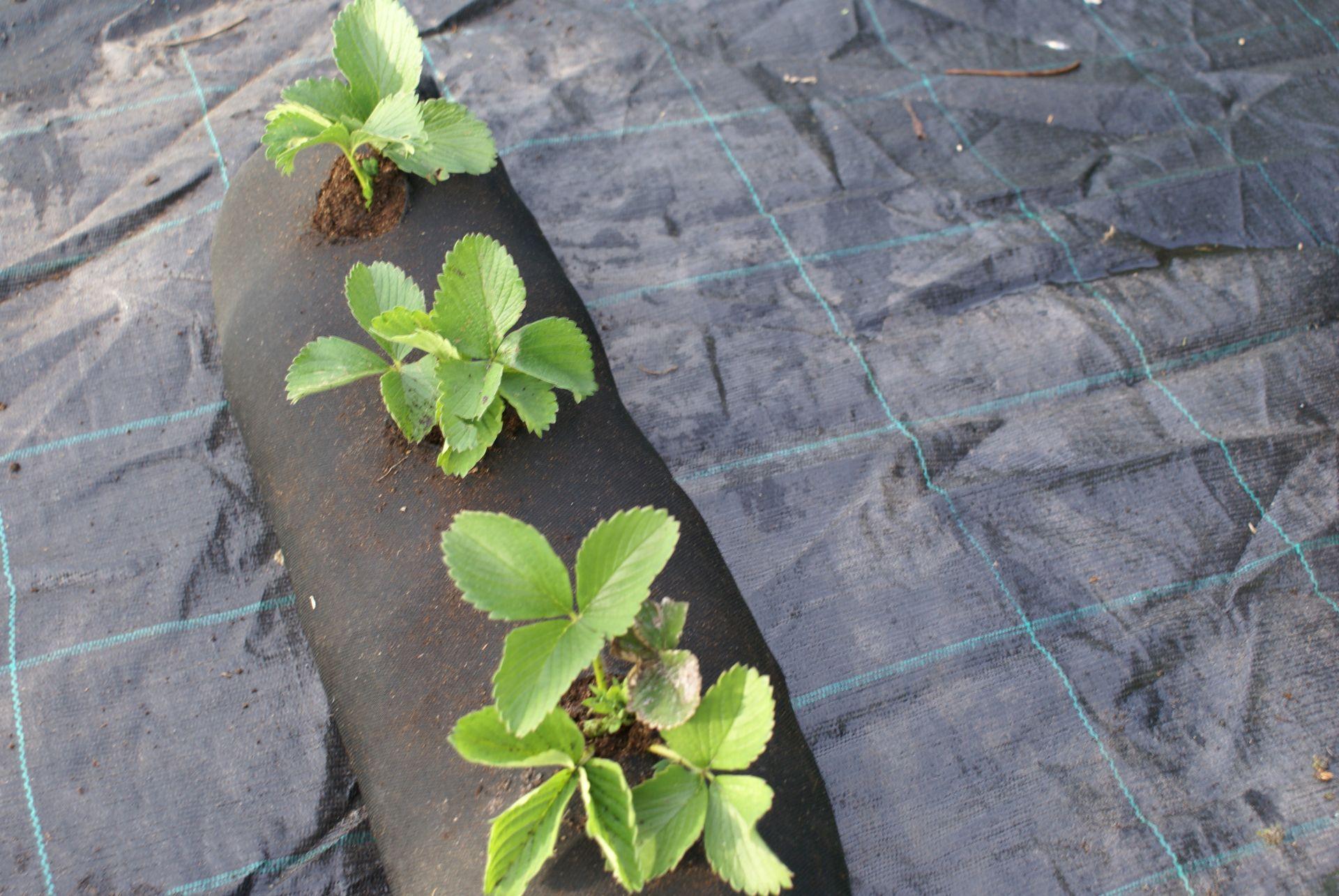 4m plantation geotextile weed tissu jardin for Jardin plantation